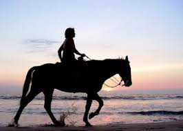 horse riding in the coast